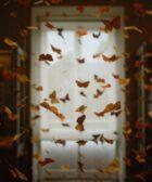 Adapta tu casa al otoño y libérate de alergias